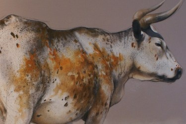 Nguni cow by Sol Smook
