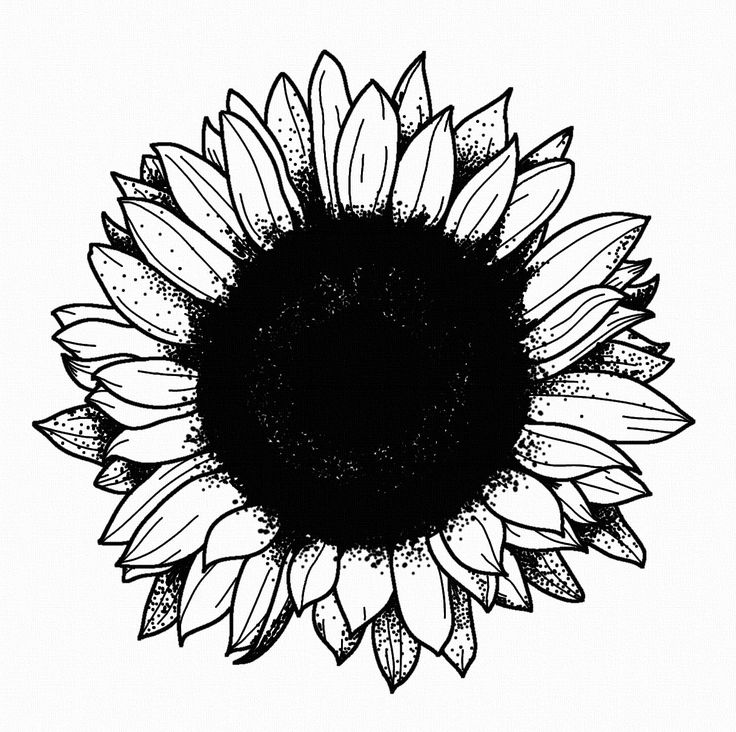 STANLEY DUKE tattoo design tattoos illustration dotwork linework blackwork stippling black flower sunflower