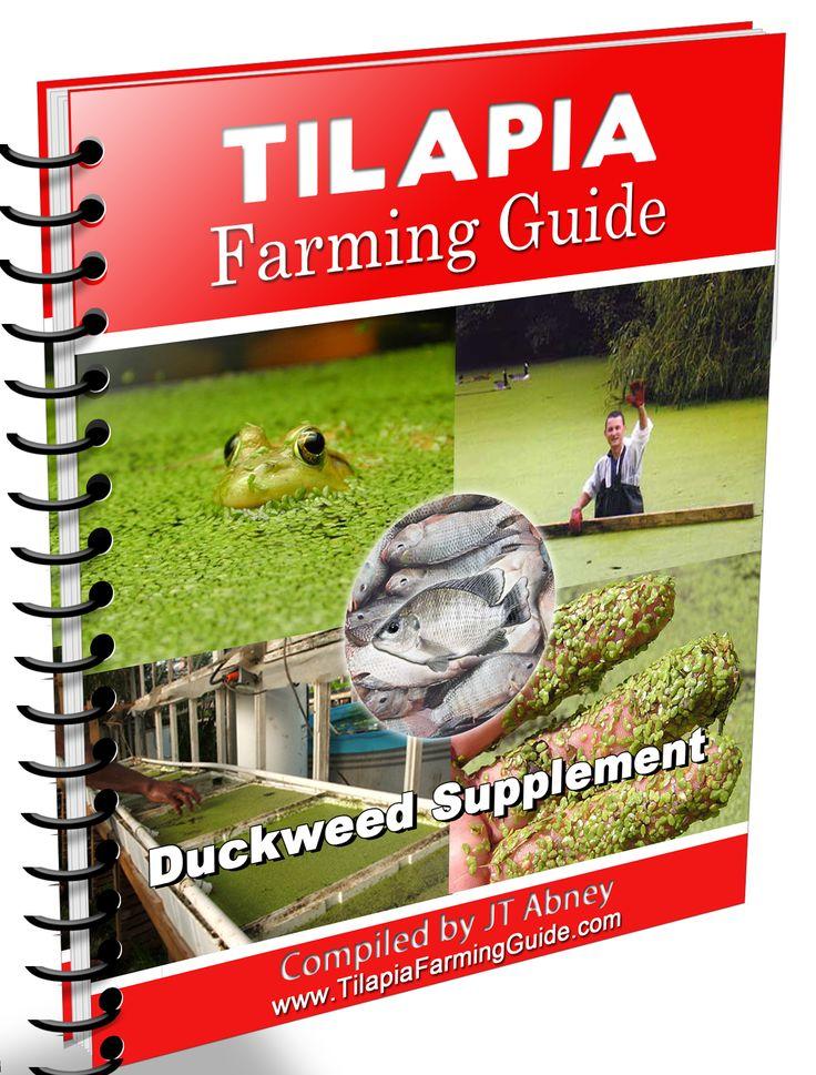 Tilapia Farming Guide