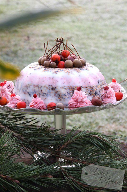 Energiekuchen für die Vögel DIY - Vogelfutter Kuchen Anleitung