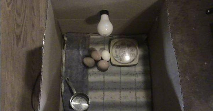 Como fazer uma incubadora para aves domésticas. Fazer a sua própria incubadora para aves é uma maneira divertida e fácil de chocar pintinhos. A maioria das coisas necessárias para a construção podem ser encontradas ao redor da sua casa. As crianças adoram ajudar e serem recompensadas assistindo à eclosão dos ovos. É assim que a maioria dos agricultores chocavam os ovos antes das incubadoras ...