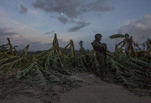 A soldier stands guard in a banana plantation after hurricane Patricia struck El Rebalse in Mexico