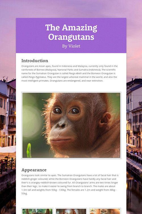 The Amazing Orangutans by Violet