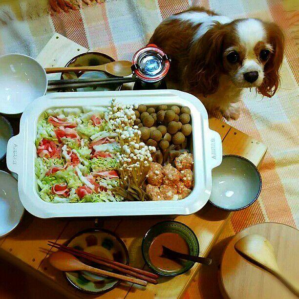 やっとBRUNOデビュー\(^o^)/ 今日は暖かいけど旦那さんから鍋のリクエスト♪ 旦那さん作の座卓で頂きます(^o^) そこはブランの席じゃないよ~ - 54件のもぐもぐ - 今日は鶏つくね鍋♪ by kyuja