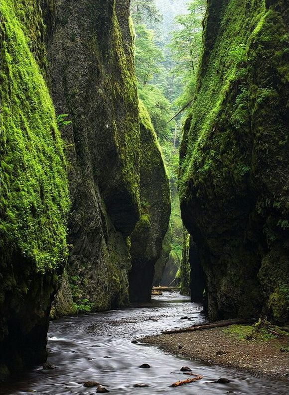 Fern Canyon in Redwood