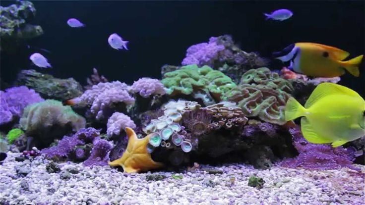 24 best images about aquarium screensavers on pinterest for What sound does a fish make