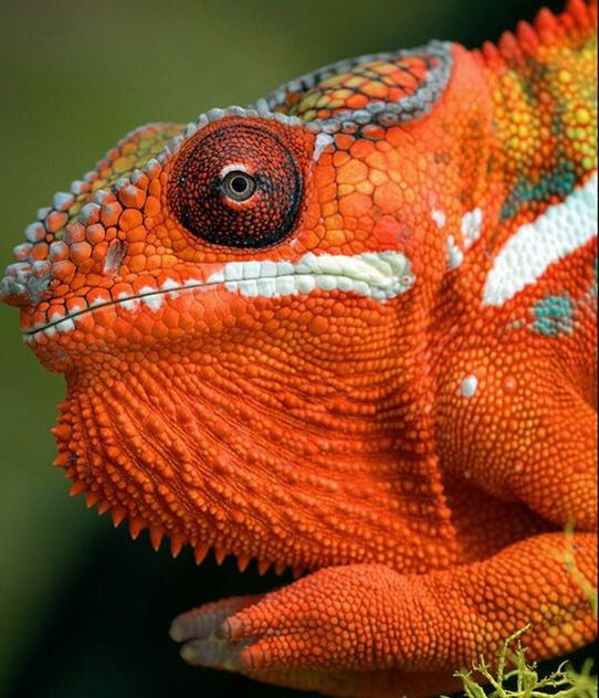 3566 Best Reptiles And Amphibians Images On Pinterest