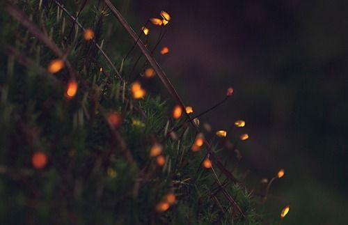 Bio-luminescent Forest, Tarek Mawad