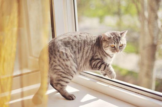 Koty nie zawsze spadają na cztery łapy