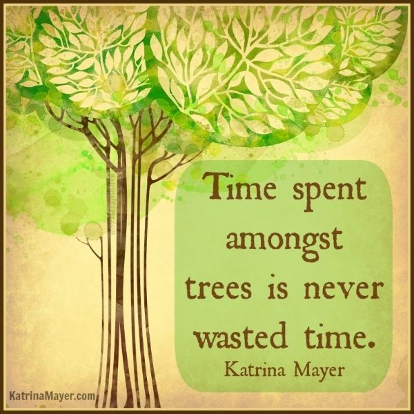 Time spent amongst trees is never wasted time. - Katrina Mayer https://www.youtube.com/watch?v=AluJQ0QFSHga