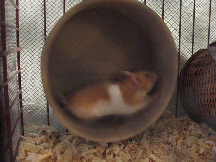 DIY super quiet hamster wheel.
