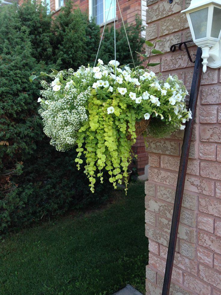 Hanging Flower Baskets In Full Sun : Best ideas about hanging flower pots on