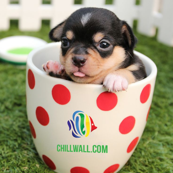 Isn't this puppy absolutely adorable? Chillwall.com