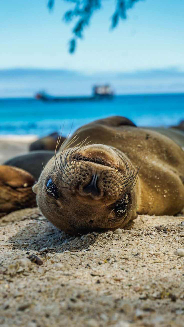 Are Sea Lions The Puppies Of The Sea?