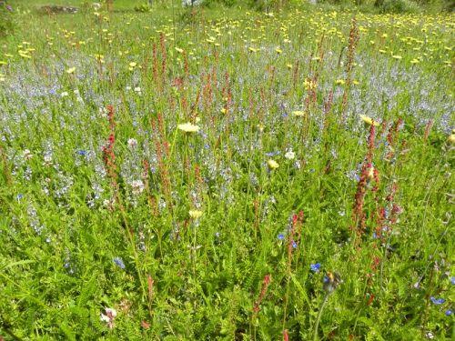 Sommaräng med varierande växtlighet och färger. Fotat av Ockelbo Webbdesign.