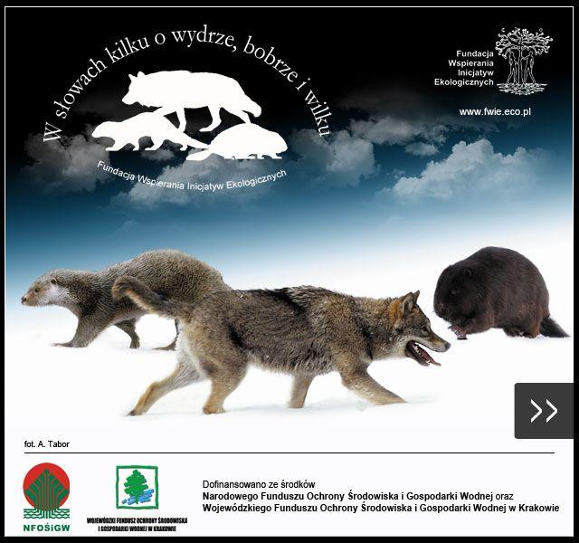 Przyroda Polski, zwierzęta, quizy, gry online, kolorowanki, puzzle, przyroda i biologia, uczniowie i nauczyciele