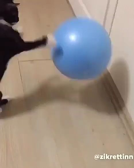 """Ball ball ball!""..!! – fighting"