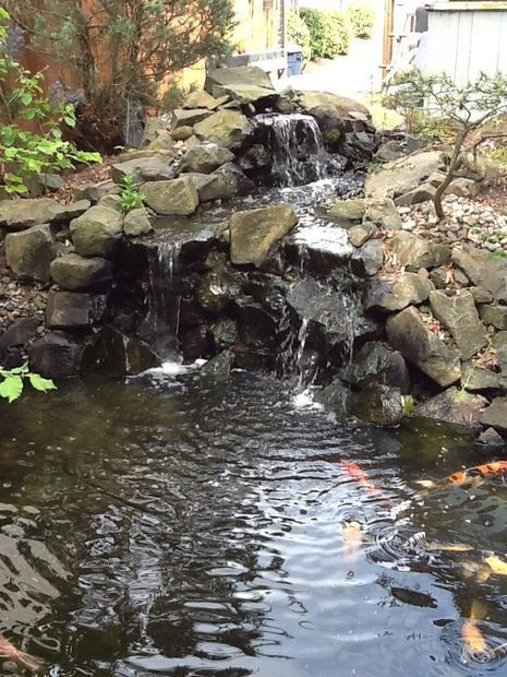 DIY Backyard Pond and Waterfall - easy, relatively cheap, with plants and fish.  A 10-yr-old made this one!