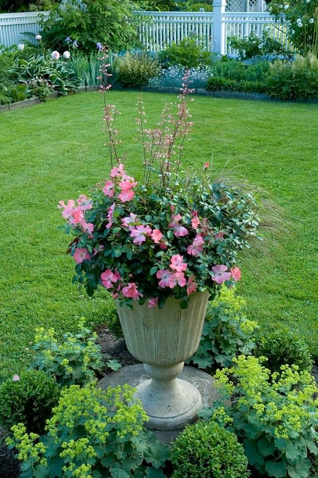 Flower carpet coral planted with coral bells give a little for Simple flower garden ideas
