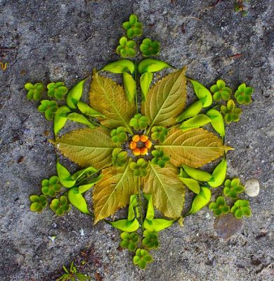 Earth Witch:  #Earth #Witch ~ Omwoods: Flower Mandala Nature Magick.