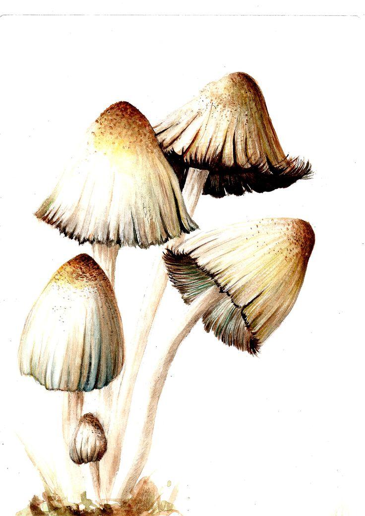 Best 25 champignon dessin ideas on pinterest dessin de - Dessiner un champignon ...