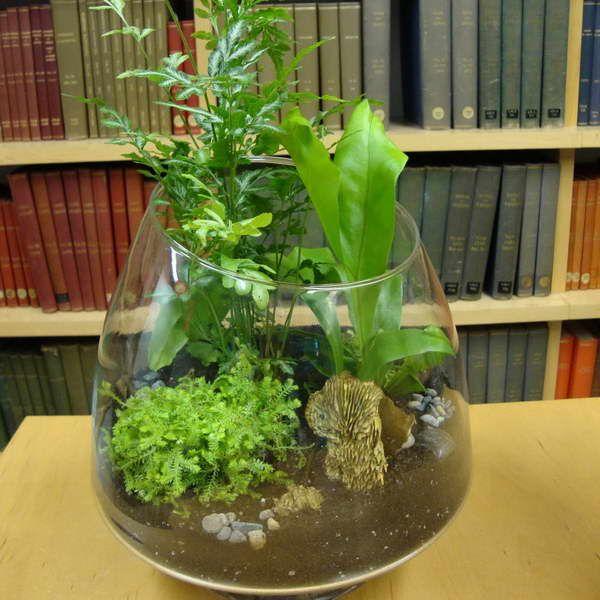 tropical plant terrarium arrangement