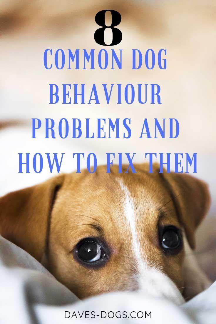 8 Common Dog Behaviour Problems And How To Fix Them Dog Behavior