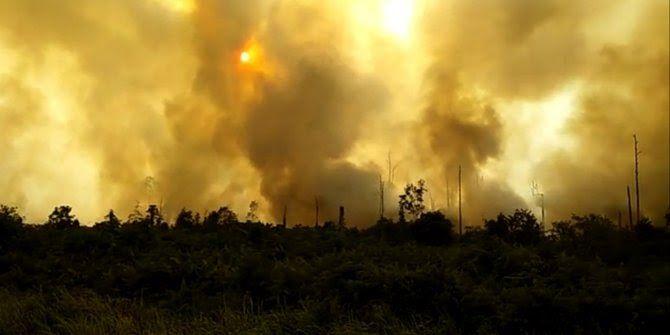 Perkebunan Kelapa Sawit Di Aceh
