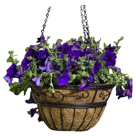 Crafted of metal and showcasing an eco-friendly coir fiber liner, this classic hanging basket is perfect for displaying blooms on your porch or in the garden...