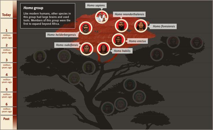 Human Family Tree | The Smithsonian Institution's Human Origins Program  interactive human family tree  http://humanorigins.si.edu/evidence/human-family-tree