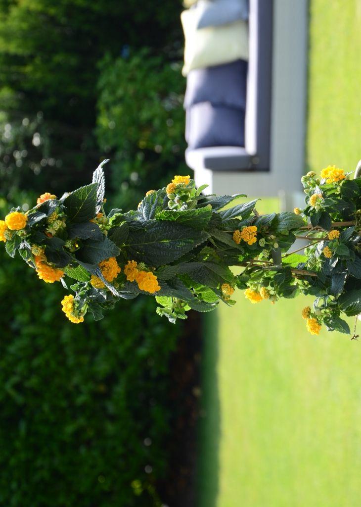 kuhles bluhpflanze wohnzimmer inspiration bild oder cabdcbbebbb