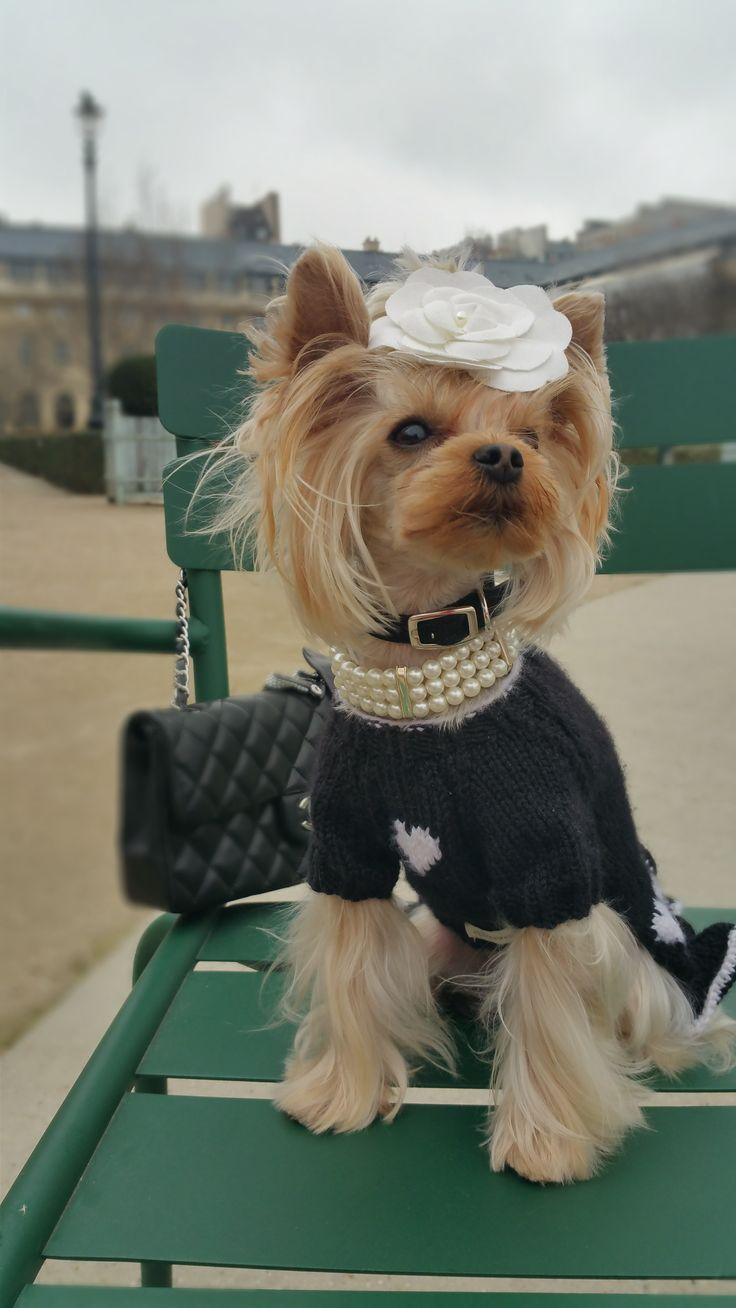 65 besten Chiwowow dog clothing Bilder auf Pinterest | Hunde ...
