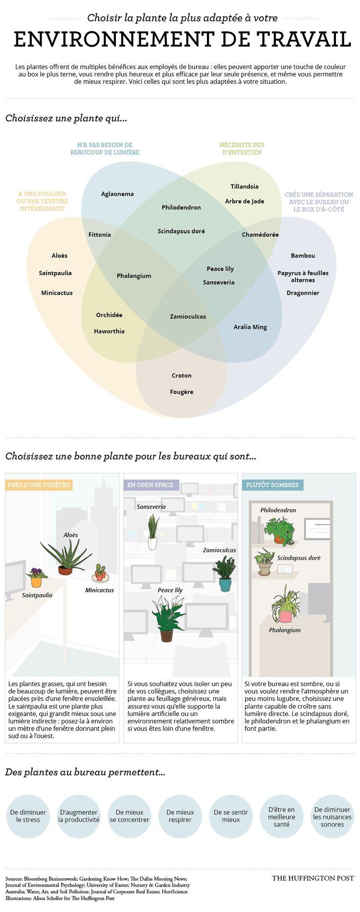 "#Organisation #Travail ""Bienetre Choisir sa plante pour son #bureau..."