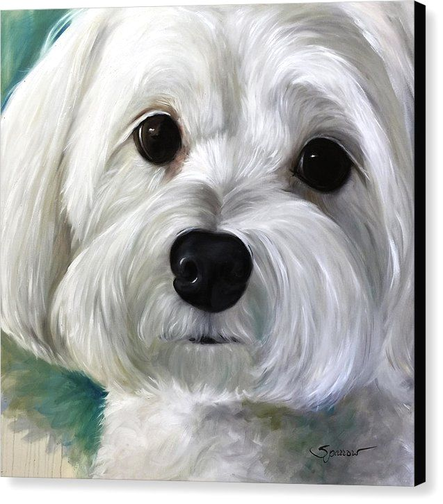 Dog Paintings Image By Maltesedog On Maltese Dog Cute Dog