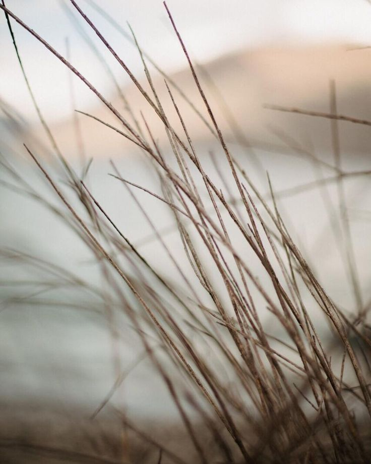 Wild tussocks and luxe winter backdrops in Queenstown, NZ.   by @dawnthomsonphoto 🌾🌾🌾
