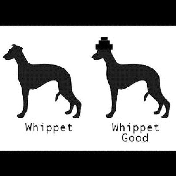 I Heart Whippets Facebook 59 best images about M...