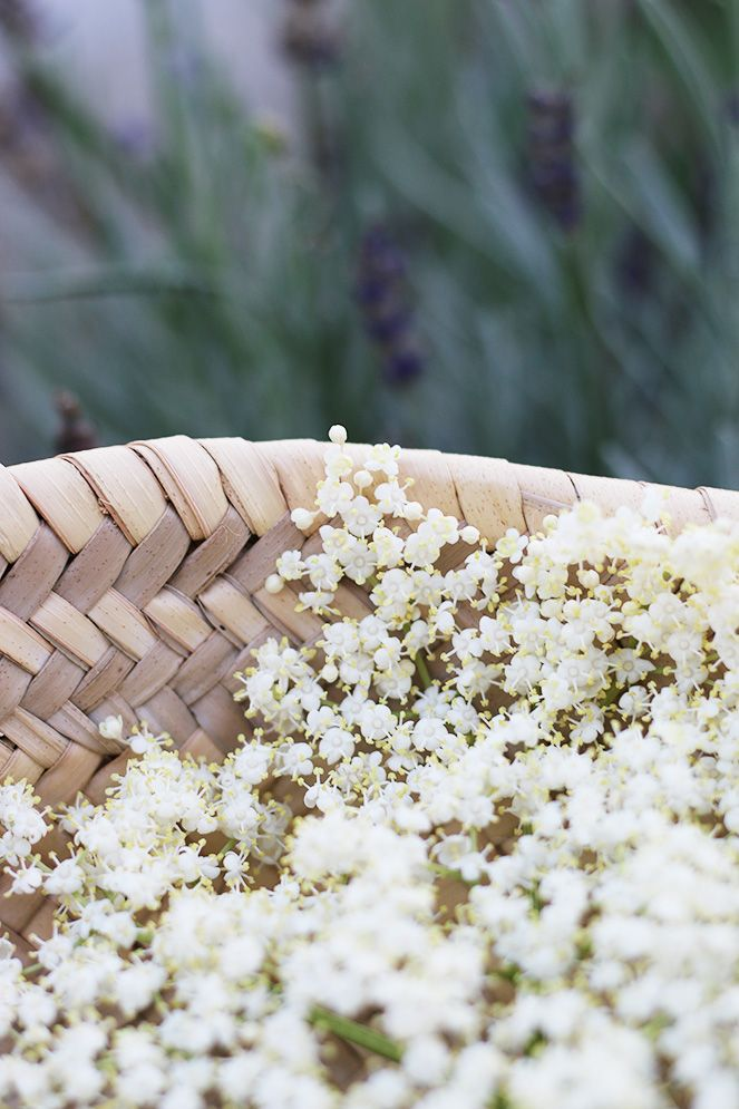 Homemade elderflower cordial: recipe!