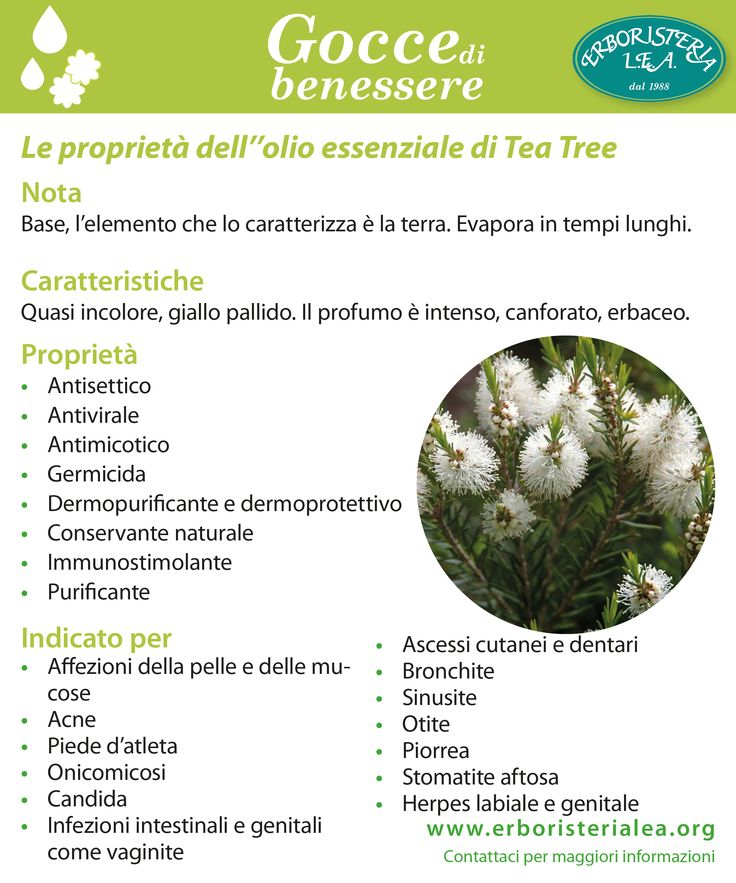 le proprietà dell'olio essenziale del Tea tree #antisettico #antimicotico