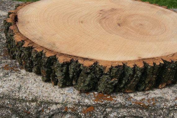 Large 13 14 tree slab trunk slice cake stand wood for Large tree trunk slices