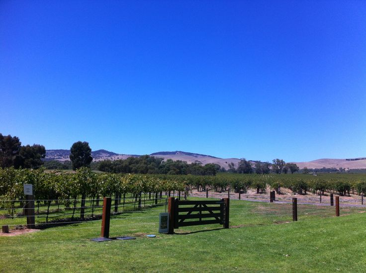 Jacobs Creek winery,Barrosa Valley,  Adelaide, South Australia. Such a lovely place to chill and have a wine.  Such a lovely view.