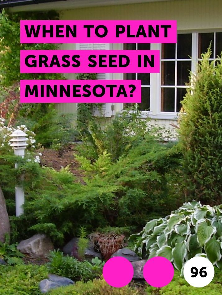 When To Plant Grass Seed In Minnesota Mulch Landscaping Bermuda Grass Bougainvillea Bonsai