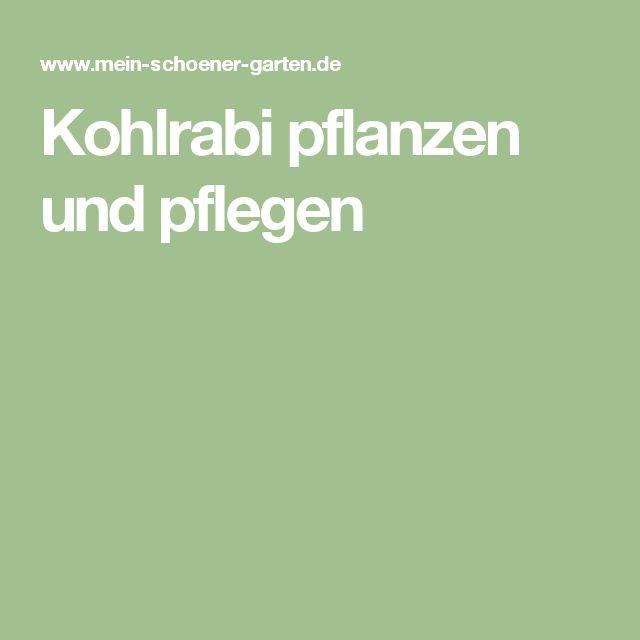 Kohlrabi pflanzen und pflegen