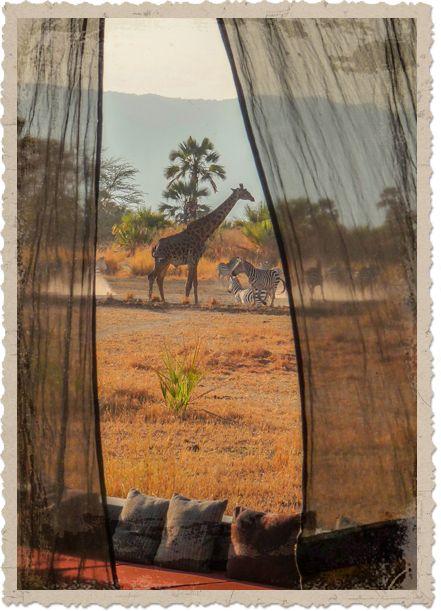 Le Chem Chem Safari Lodge est idéalement situé dans la réserve de la faune…