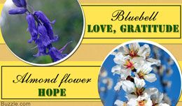 Here is a list of flower names along with their symbolic meanings. Find out how to use the language of flowers to express deep-felt emotions like love, longing, anticipation, jealousy, hope, and so on.