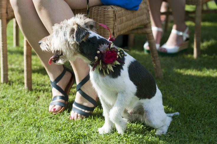dog at a wedding / flowers for dog / pies w dniu ślubu / kwiaty dla psiaka / fot. fot. Blackgalaxy Photography