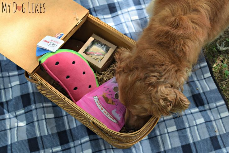 Throwback Thursday to when Harley and Charlie from My Dog Likes tried our June Dog Box last month! Check out what they thought of the fun picinic themed toys and treats!