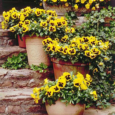 Classic Containers - Pansies & Viola Gardens - Southern Living