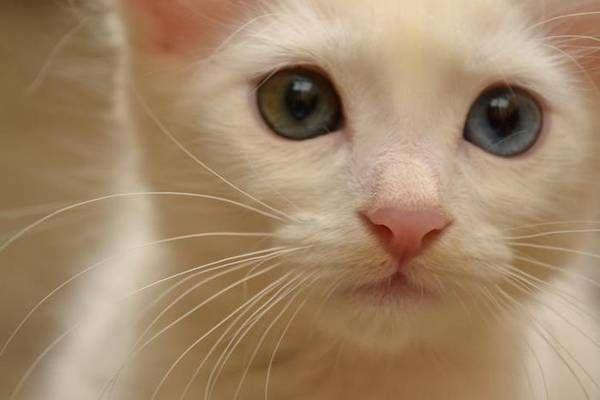 Dia da fofura: comemore o Dia Mundial do Gato