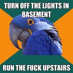 paranoid parrot: Penguin Meme, Penguins Memes