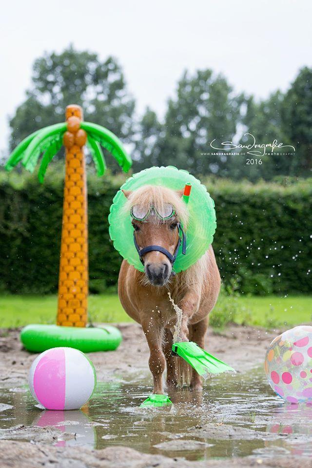 1094 besten Pferde  Reiten Bilder auf Pinterest  Pferde